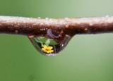 Droplet Flower
