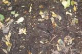 Large Mooseprint  At Artist's Bluff