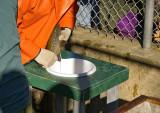 Fertilizing the eggs
