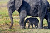 Elephant and child - Botswana