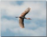 Birds 2010-02 15 09 54.jpg