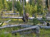 West Thumb area, Yellowstone