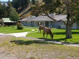 Mammoth Hot Springs, Yellowstone