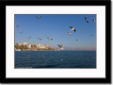 Seagulls on the Sea of Galilee