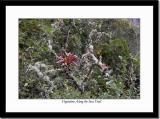 Vegetation Along the Inca Trail