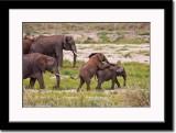 Juvenile Elephants at Play
