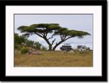 African Landscape 3
