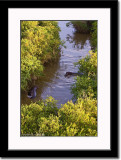 Birdseye View of Hippos