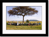 Champagne Brunch Under Acacia Tree in the Wilderness