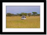 Wildlife Game ala Serengeti