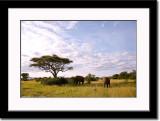 African Landscape 5