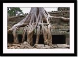 Impressive Root System