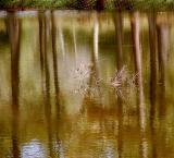11 16 05 Reflections, VP, olyuz.jpg