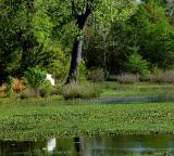 04 09 06, Swamp, Nikon D50.jpg