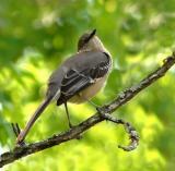 04 11 06, Bird, Tamron 28-300, handheld, Nikon D50.jpg