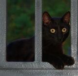 07 15 06 ,Cat on Landing, night shot, flash, handheld, Nikon D50, Tamron lens, .jpg