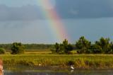 Rainbow Viera Bird net.7551.jpg