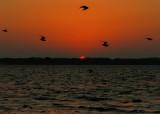 sunsetbirds.nt2333.jpg