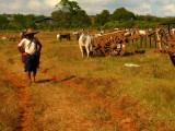 Farmer market.jpg