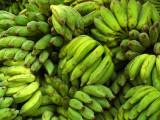 Green bananas.jpg