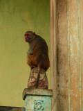 Monkey business MP.jpg