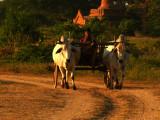 Local transport Bagan.jpg