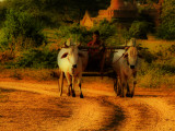 Local transport Bagan hdr.jpg