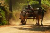 Dusty road Bagan.jpg