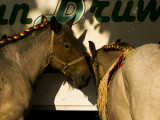 2 horses in the shade web.jpg