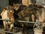 Conversation between horses web.jpg