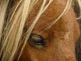 Mini horse face web.jpg
