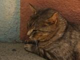 Sleeping cat.jpg