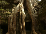 Jungle temple of Ta Prohm.jpg