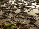 Mud Trolieberg.jpg