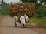farmers around badami