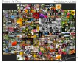 Photo a Day: What Do You See In A Year?