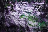 Devil Forest