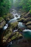 Green -- Tong-Hou Stream