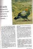 Uccelli in Natura-2 2009