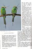 Uccelli in Natura-3 2009