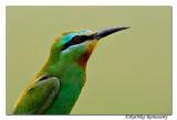 Portrait of Birds.