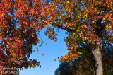 Autumn, a different view from the front yard