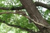 Mama Squirrel.jpg