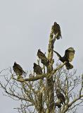 Turkey Vulture Party