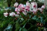 Yard Flowers 1