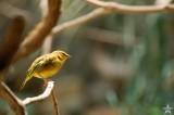 African Bird 6