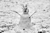 Snowbunny?