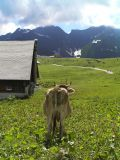In Switzerland, even the cows enjoy the view