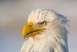 eagles_2009