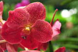 Orchids - Celebration of Colors